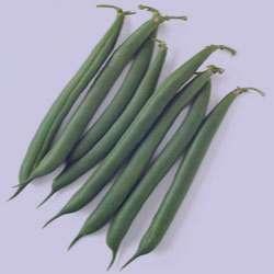 لوبیا سبز , خواص لوبیا سبز , فواید لوبیا سبز , مضرات لوبیا سبز