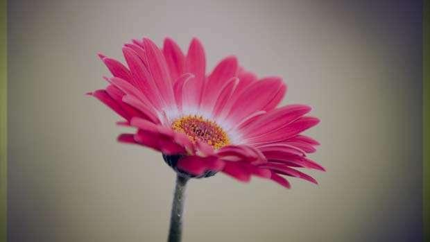 تعبیر خواب گل , تعبیر خواب گل رز , تعبیر خواب گل رز قرمز , تعبیر خواب گل سفید