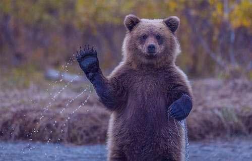تعبیر خواب خرس , تعبیرخواب خرس , خرس در خواب دیدن , تعبیر خواب خرس سیاه و سفید