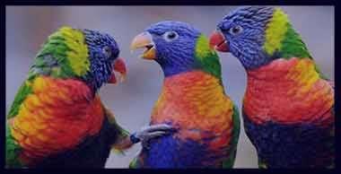 تعبیر خواب طوطی , تعبیر خواب طوطی سبز و سفید و آبی و زرد , تعبیر خواب طوطی کاسکو سخنگو مرده