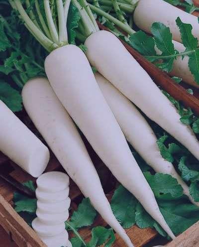 ترب سفید , خواص ترب سفید , مضرات ترب سفید , طریقه مصرف ترب سفید