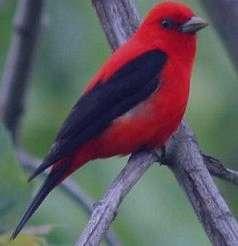 تعبیر خواب پرنده , تعبیرخواب پرنده , پرنده در خواب دیدن , jufdv o,hf \vkni