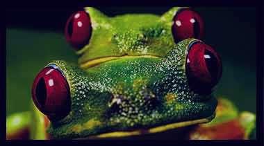 تعبیر خواب قورباغه,تعبیر خواب قورباغه سبز بزرگ,قورباغه در خواب دیدن,تعبیر خواب قورباغه مرده,تعبیر خواب قورباغه سیاه