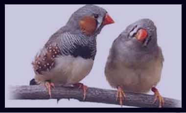 Image result for تعبیر خواب پرنده