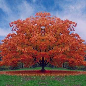 تعبیر خواب درخت سیب توت انگور انار گردو انجیر کاشتن