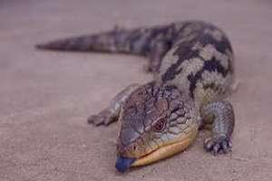 تعبیر خواب تمساح در اب , تعبیر خواب تمساح , تعبیر خواب تمساح کوچک , تمساح در خواب دیدن