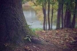 تعبیر خواب درخت سبز , تعبیر خواب درخت , تعبیر خواب درخت تناور , خواب درخت دیدن