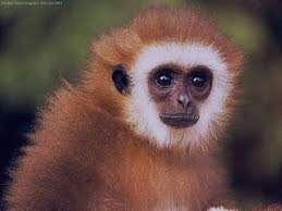 تعبیر خواب میمون , تعبیر خواب میمون قهوه ای , تعبیر خواب میمون سیاه , تعبیر خواب میمون سیاه رنگ , تعبیر خواب میمون زرد