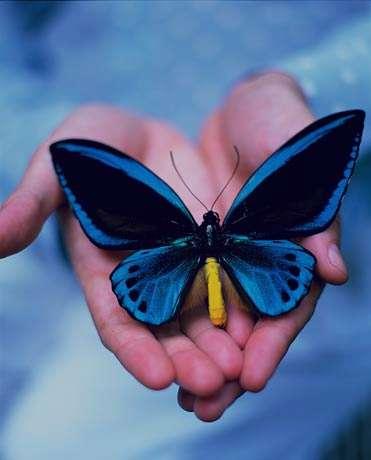 تعبیر خواب پروانه , تعبیر خواب پروانه سفید , تعبیر خواب پروانه آبی , تعبیر خواب پروانه سیاه
