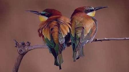 تعبیر خواب گرفتن پرنده , تعبیر خواب پرنده , تعبیر خواب پرنده در قفس , پرنده در خواب دیدن