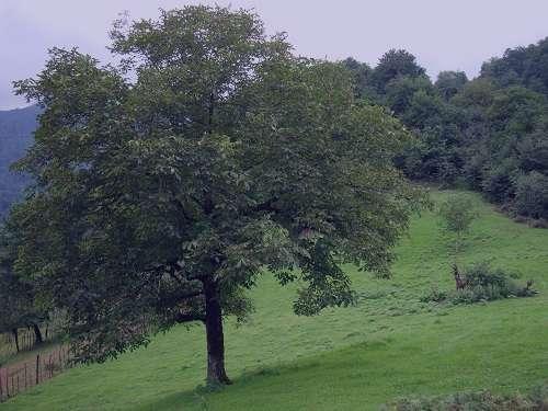 تعبیر خواب درخت , تعبیر خواب درخت انار , تعبیر خواب درخت سیب , تعبیر خواب درخت توت