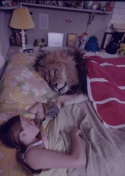 تعبیر خواب شیر جنگل در خانه , تعبیر خواب شیر جنگل , شیر در خواب دیدن , تعبیر خواب شیر جنگلی