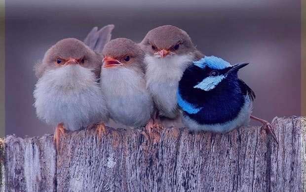 تعبیر خواب پرنده , تعبیر خواب پرنده سفید , تعبیر خواب پرنده زیبا , تعبیر خواب پرنده در قفس