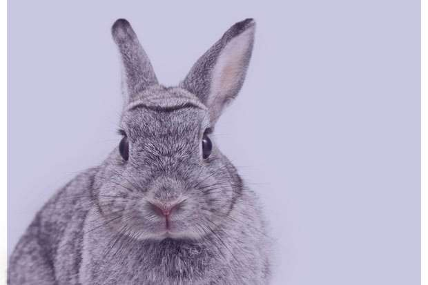 تعبیر خواب خرگوش , تعبیر خواب خرگوش قهوه ای , تعبیر خواب خرگوش سفید بزرگ , تعبیر خواب خرگوش سفید
