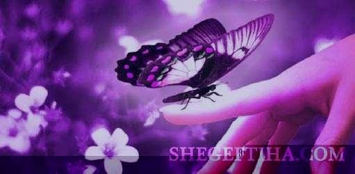 تعبیر خواب پروانه , تعبیر خواب پروانه رنگی , تعبیر خواب پروانه سفید , در خواب پروانه دیدن