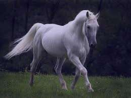 تعبیر خواب اسب , تعبیر خواب اسب سواری , تعبیر خواب اسب قهوه ای , اسب در خواب دیدن