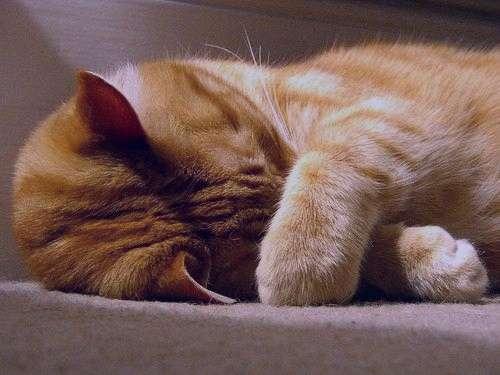 تعبیر خواب گربه سیاه , تعبیر خواب گربه , گربه در خواب دیدن , خواب گربه