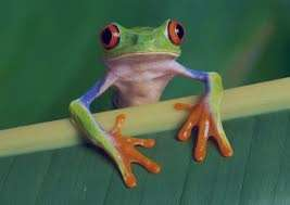 تعبیر خواب قورباغه , تعبیر خواب قورباغه سبز بزرگ , قورباغه در خواب دیدن , تعبیر خواب قورباغه مرده