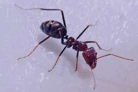 تعبیر خواب مورچه تعبیر , خواب مورچه سیاه , خواب مورچه دیدن , مورچه در خواب دیدن