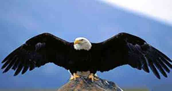 تعبیر خواب عقاب , تعبیر خواب عقاب سیاه و سفید , تعبیر خواب عقاب در خانه