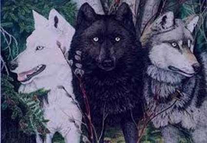 تعبیر خواب گرگ , تعبیرخواب گرگ سیاه , گرگ در خواب دیدن , تعبیرخواب گرگ قهو ه ای