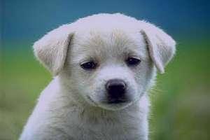تعبیرخواب سگ , سگ در خواب دیدن , تعبیر خواب توله سگ , تعبیر خواب سگ سفید