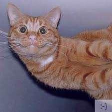 تعبیر خواب گربه , تعبیر خواب گربه زرد , تعبیر خواب گربه سیاه , گربه در خواب دیدن