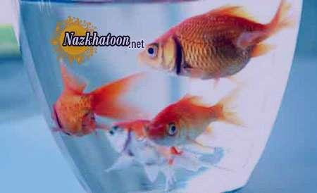 تعبیر خواب ماهی قرمز , تعبیر خواب ماهی , تعبیر خواب ماهی قزل آلا , ماهی در خواب دیدن