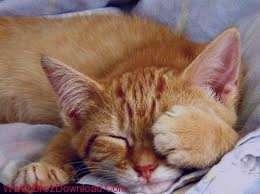 تعبیر خواب گربه , تعبیر خواب گربه سیاه , تعبیر خواب گربه مرده , تعبیر خواب بچه گربه