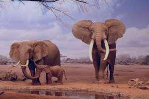 تعبیر خواب حمله فیل , تعبیر خواب بچه فیل , تعبیر خواب فیل , فیل در خواب دیدن