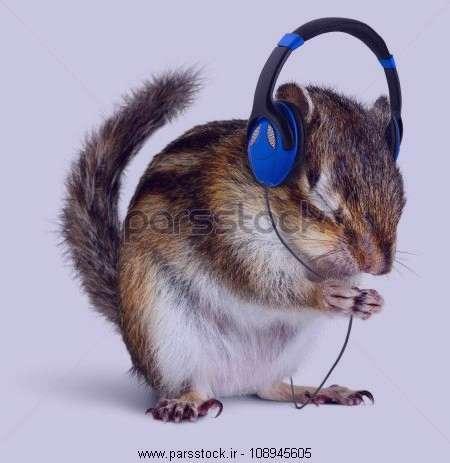 تعبیر خواب موش از نظر امام صادق , تعبیر خواب موش , تعبیر خواب موش طوسی , تعبیر خواب موش قهوه ای