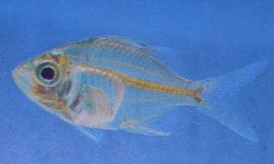 تعبیر خواب ماهی , تعبیرخواب ماهی مرده , ماهی در خواب دیدن , تعبیر خواب ماهی قزل آلا