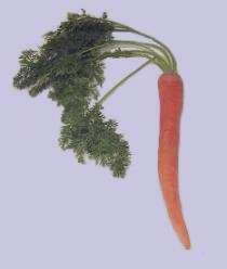 تعبیر خواب هویج کاشتن , تعبیر خواب هویج , تعبیر خواب هویج پختن , هویج در خواب دیدن