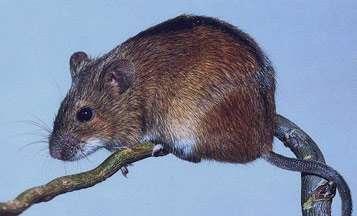 تعبیر خواب موش , تعبیر خواب موش مرده , تعبیر خواب موش سیاه , تعبیر خواب موش سفید