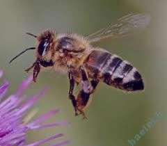 تعبیر خواب عسل , تعبیرخواب عسل خریدن , عسل در خواب دیدن , تعبیرخواب عسل خوردن