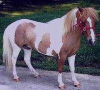 تعبیر خواب اسب قهوه ای , تعبیرخواب اسب , دیدن اسب در خواب , تعبیرخواب اسب مرده