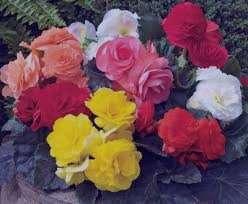 تعبیر خواب گل خاک , تعبیر خواب گل , تعبیر خواب گل رز , گل در خواب دیدن
