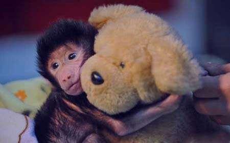 تعبیر خواب بچه خرس , تعبیر خواب خرس , تعبیر خواب خرس قهو ه ای , خرس در خواب دیدن