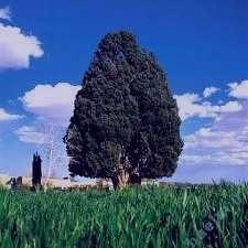 تعبیر خواب افتادن درخت , تعبیر خواب شکستن درخت , تعبیر خواب کنده درخت , درخت در خواب دیدن