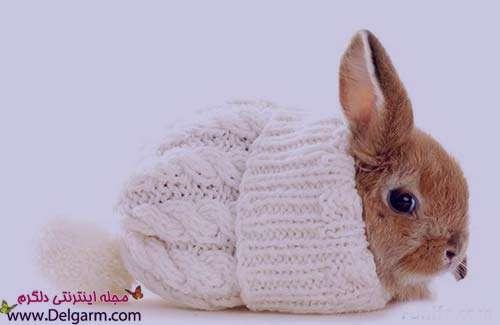 تعبیر خواب خرگوش , تعبیر خواب خرگوش سفید بزرگ , تعبیر خواب خرگوش قهوه ای , تعبیر خواب خرگوش خاکستری
