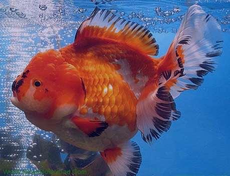 تعبیر خواب ماهی در خشکی , تعبیر خواب ماهی , تعبیر خواب ماهی قزل آلا , ماهی در خواب دیدن