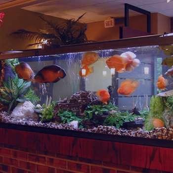تعبیر خواب آکواریوم ماهی , تعبیر خواب آکواریوم پر از ماهی , تعبیر خواب ماهی قرمز در آکواریوم