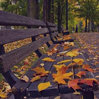تعبیر خواب پاییز , تعبیر خواب برگ پاییزی , تعبیر خواب فصل پاییز