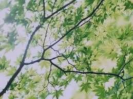 تعبیر خواب درخت سیب , تعبیر خواب درخت توت , تعبیر خواب درخت انگور , تعبیر خواب درخت انار