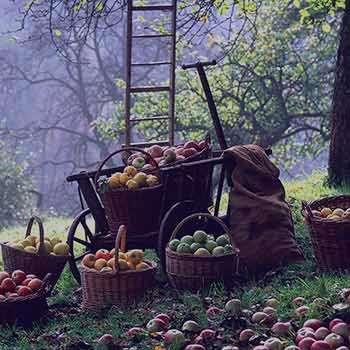 تعبیر خواب باغ میوه , تعبیر خواب باغ میوه گیلاس , تعبیر خواب باغ میوه سیب