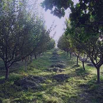 تعبیر خواب باغ , تعبیر خواب باغچه حیاط , تعبیر خواب باغ میوه