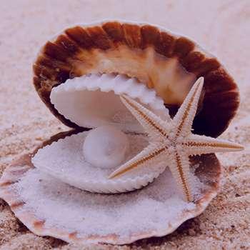 تعبیر خواب صدف , تعبیر خواب صدف دریایی , تعبیر خواب صدف و مروارید