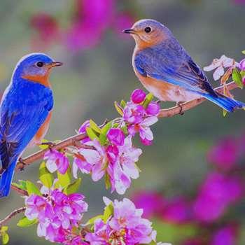 تعبیر خواب بهار , تعبیر خواب بهار نارنج , تعبیر خواب بهار در زمستان