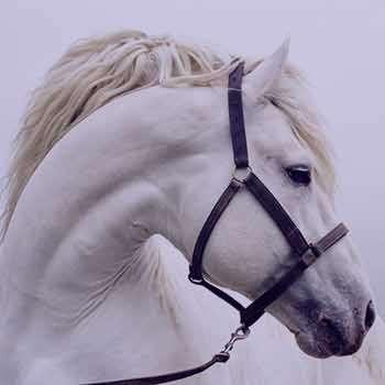 تعبیر خواب افسار , تعبیر خواب دیدن افسار , تعبیر خواب افسار اسب