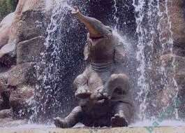 تعبیر خواب فیل , تعبیر خواب فیل در خانه , تعبیر خواب فیل دیدن , تعبیر خواب فیل کوچک